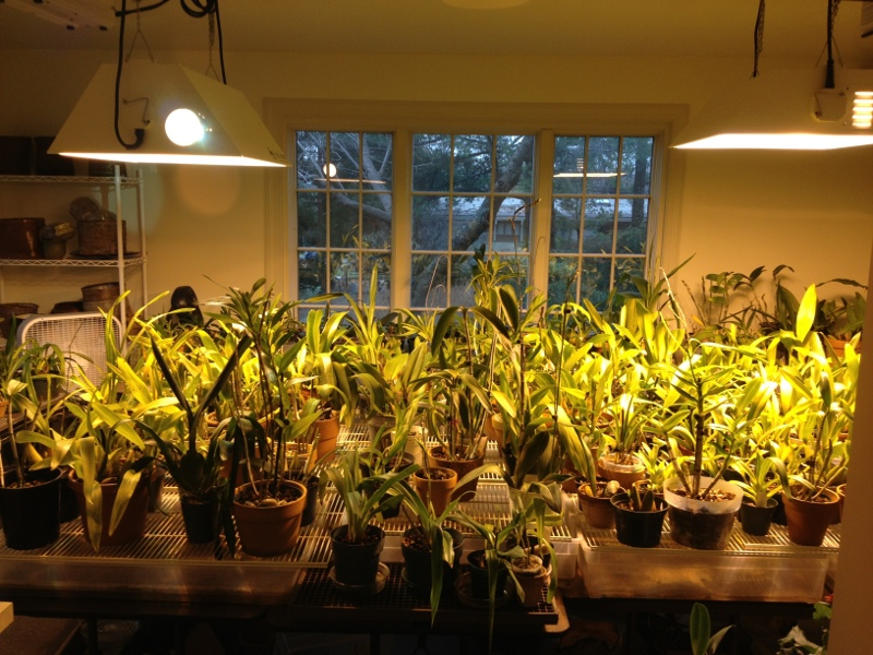 Meet Your Neighbors One Man S Orchid Obsession Forest