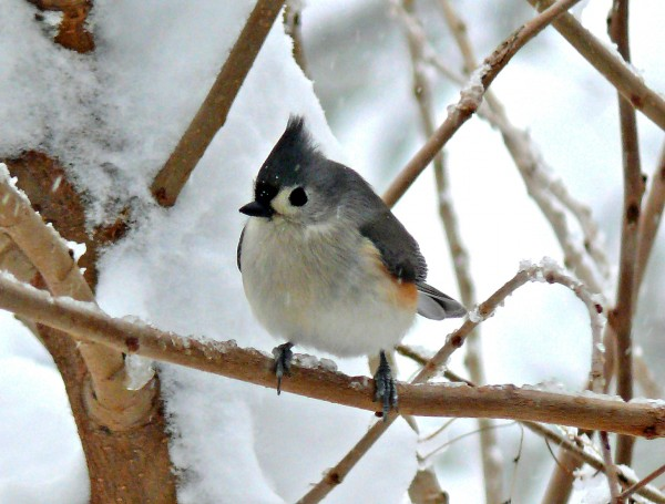 This cold weather really is for the birds | Forest Hills ...