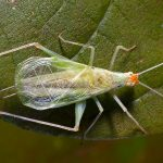 Backyard Nature: Insects produce the backyard symphony of August